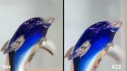 三星S9+索尼XZ2拍照对比:艳丽与素雅的决择
