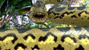 動畫電影《白蛇緣起》是這樣拍的