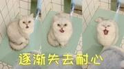 猫咪最爱偷看主人如厕