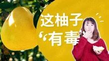 半夜吃柚子會食物中毒?
